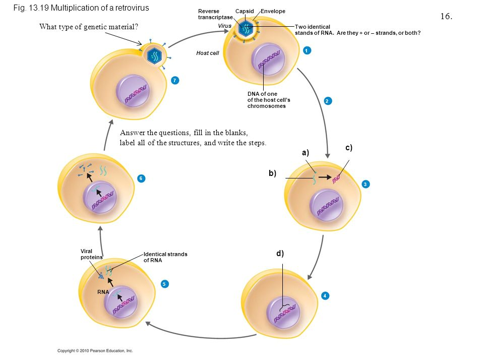 Influenza  Medical Ecology