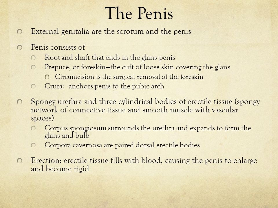 Erections for sims 2 males