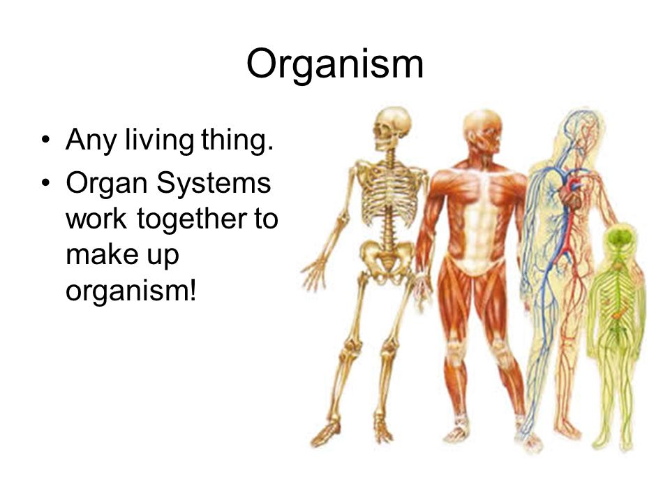 Organism Any living thing.