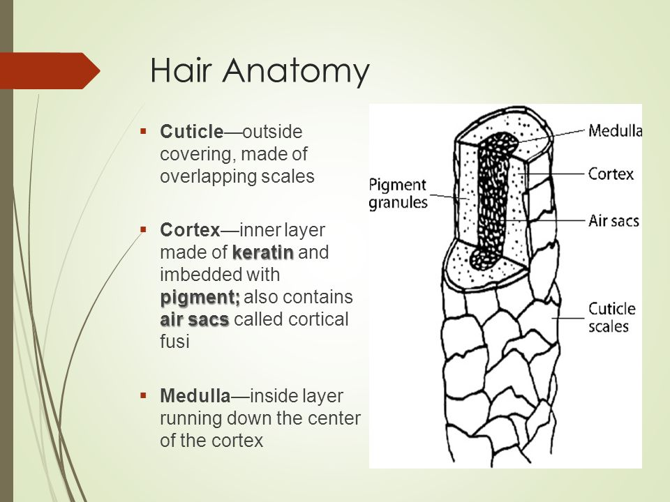 Unit 02 Hair And Fibers Ppt Video Online Download