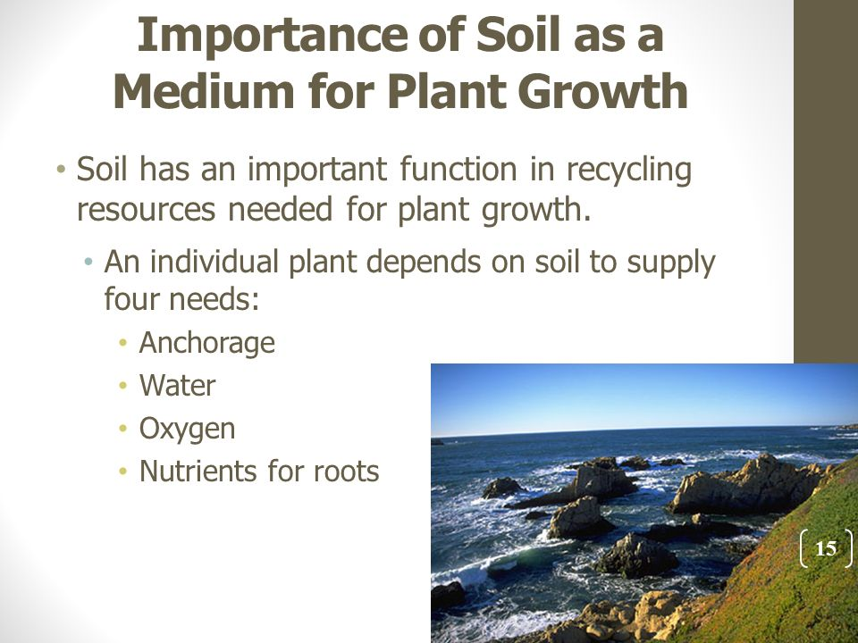 the importance of water in plant growth Plants need eighteen chemical elements for their growth—carbon (c),  and  help plants get more water and nutrients—are important binding material in soils.