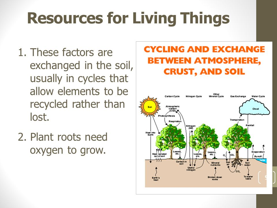 Understanding the importance of soil ppt download for Things in soil