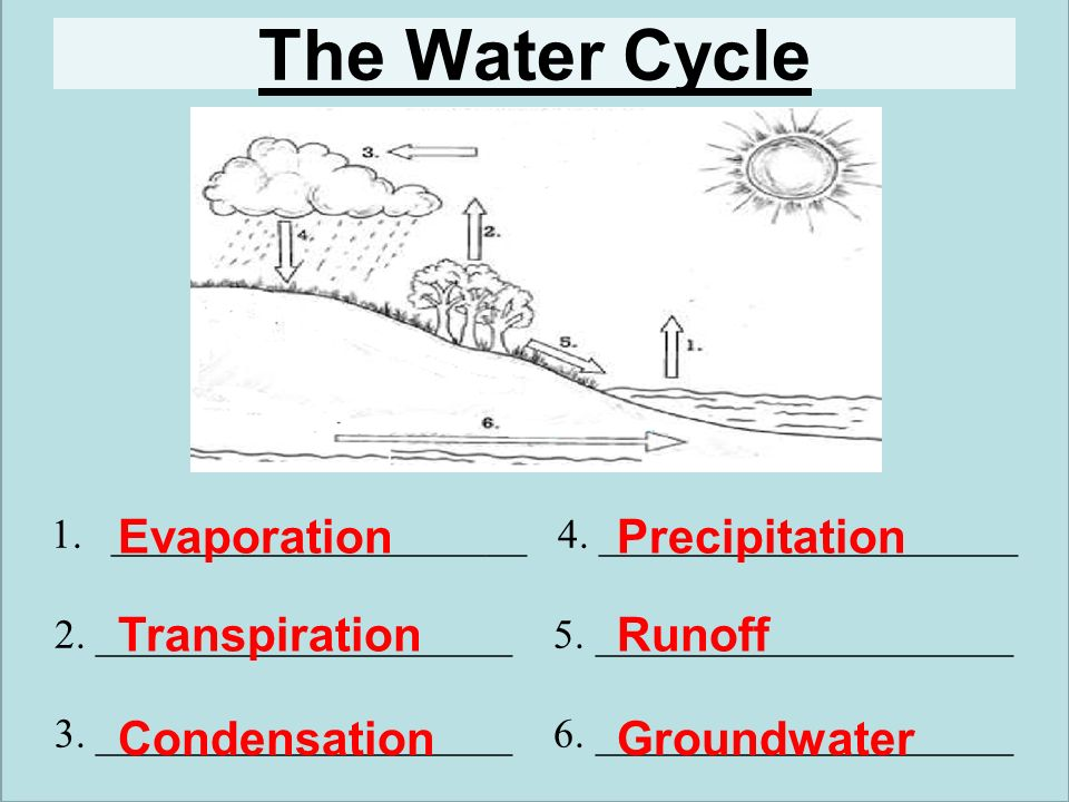 6 The Water Cycle Evaporation Precipitation Transpiration Runoff