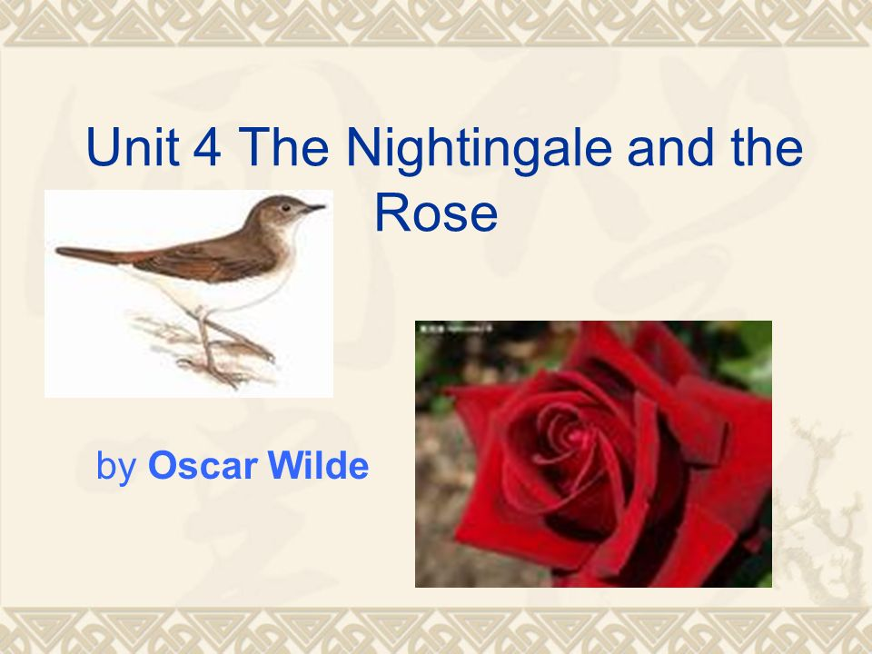 nightingale and the rose