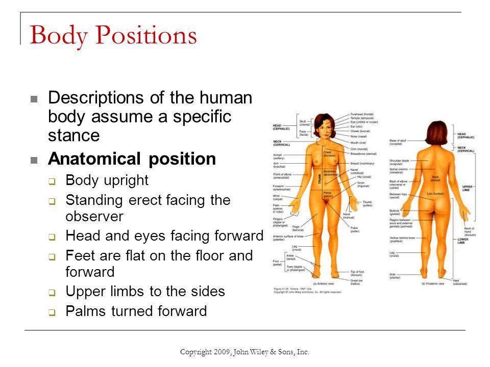 Moderno Wiley Anatomy And Physiology Fotos - Anatomía de Las ...