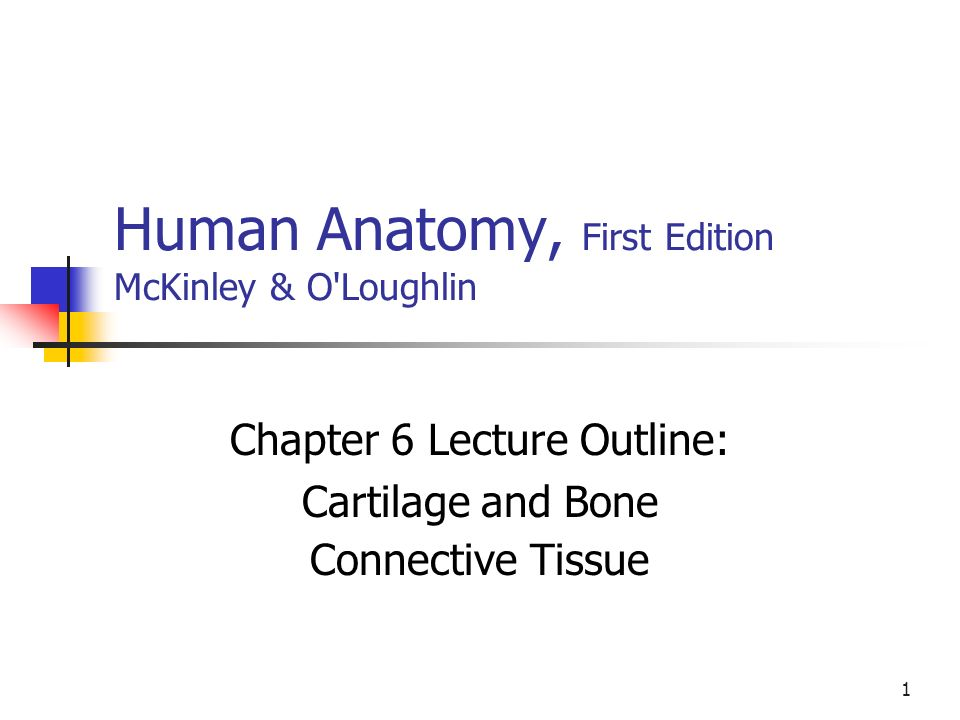 Awesome Human Anatomy And Physiology First Edition By Erin C Amerman ...