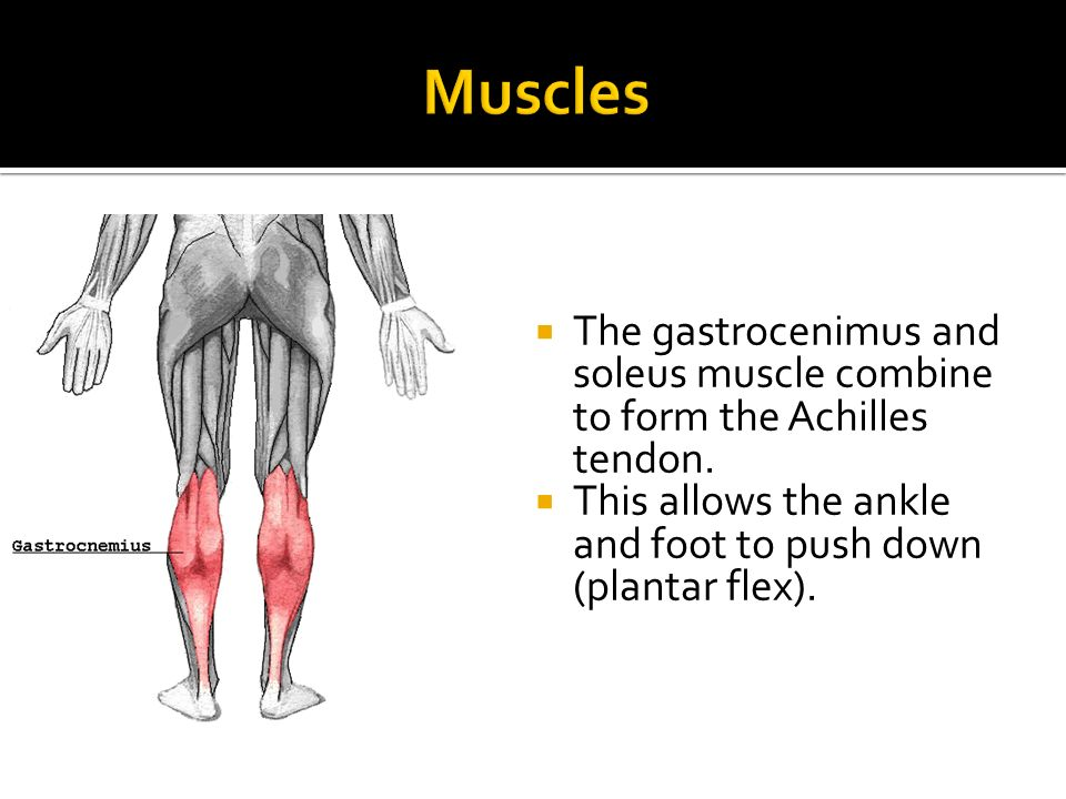 Anatomy Of A Combine : Anatomy of the foot and ankle ppt video online download