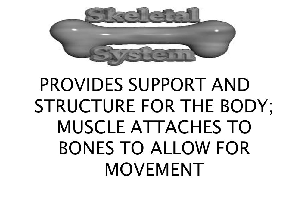 PROVIDES SUPPORT AND STRUCTURE FOR THE BODY; MUSCLE ATTACHES TO BONES TO ALLOW FOR MOVEMENT