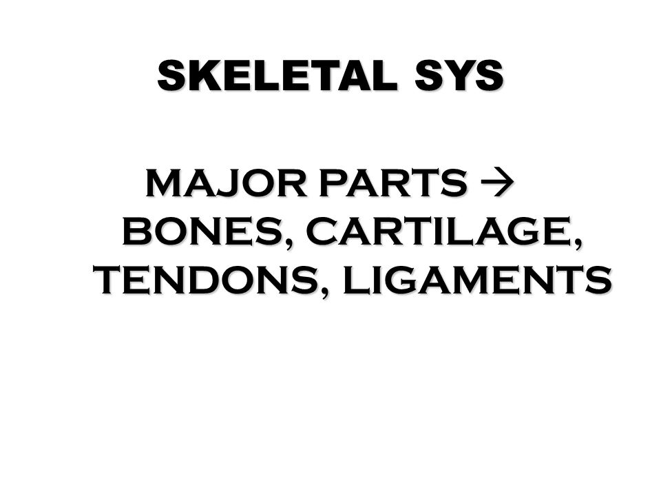 MAJOR PARTS  BONES, CARTILAGE, TENDONS, LIGAMENTS
