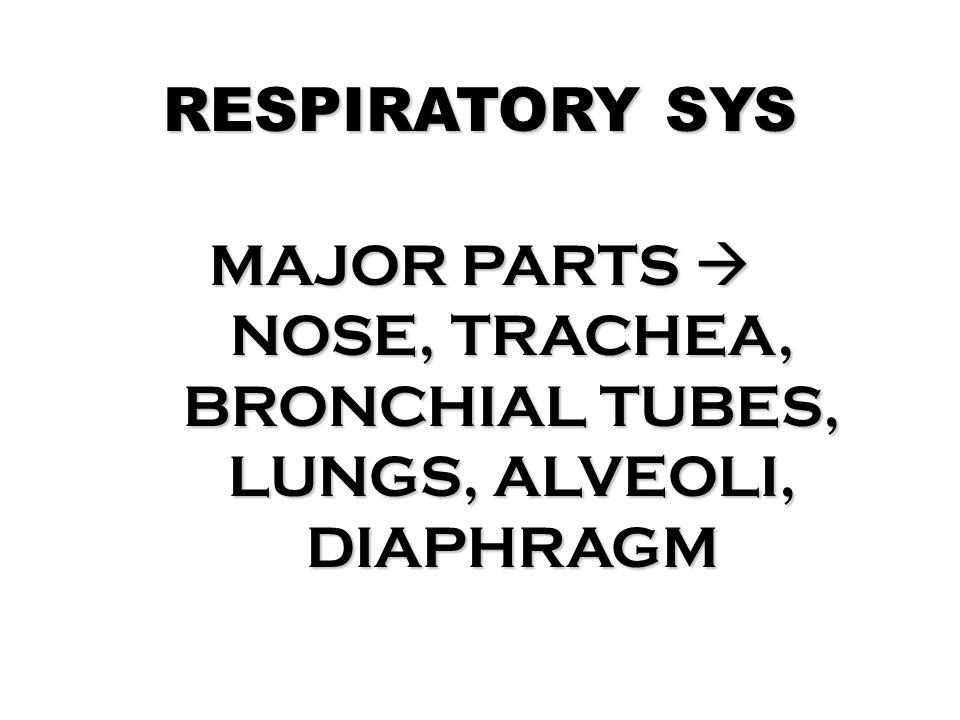 RESPIRATORY SYS MAJOR PARTS  NOSE, TRACHEA, BRONCHIAL TUBES, LUNGS, ALVEOLI, DIAPHRAGM