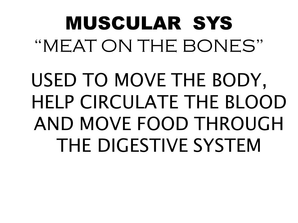 MUSCULAR SYS MEAT ON THE BONES