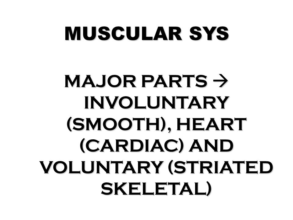 MUSCULAR SYS MAJOR PARTS  INVOLUNTARY (SMOOTH), HEART (CARDIAC) AND VOLUNTARY (STRIATED SKELETAL)