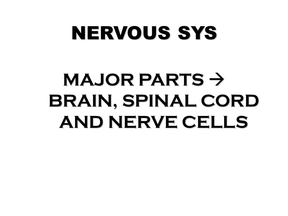 MAJOR PARTS  BRAIN, SPINAL CORD AND NERVE CELLS