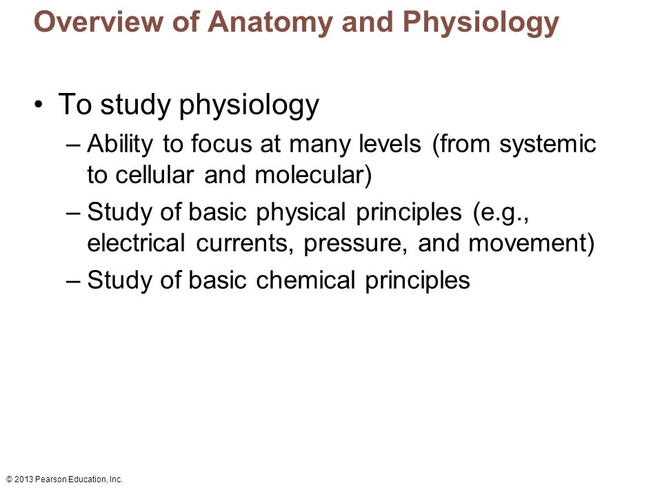an overview of anatomy and physiology A distance learning diploma course of 5 modules anatomy and physiology course all therapists should aim to complete this course anatomy is the study of the form, structure and development of the body, it's arrangements and organs.