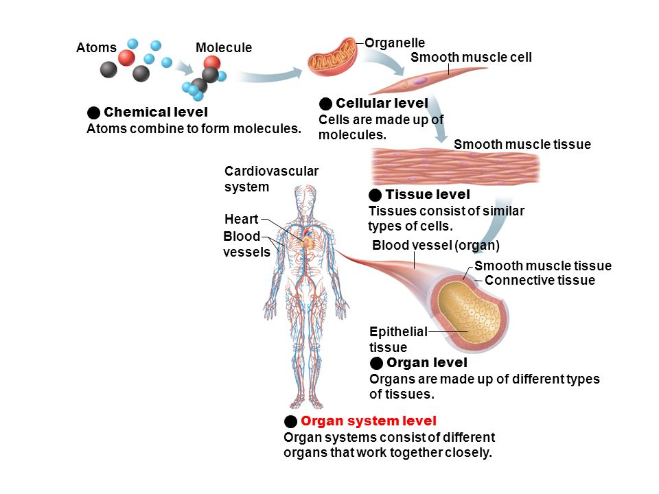 cellular level Mammalian cellular metabolism, aka the basic rules of being alive on planet earth, runs best at a ph between 738 and 742.