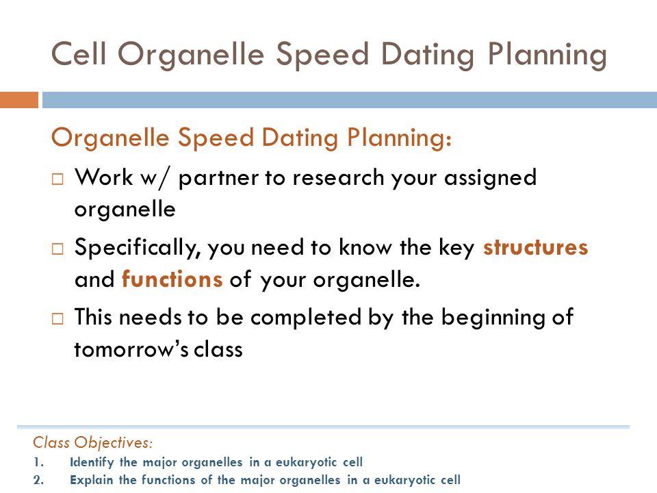 Speed dating studies