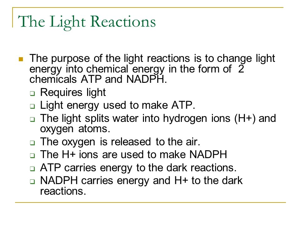 Photosynthesis STEP Grade ppt video online download