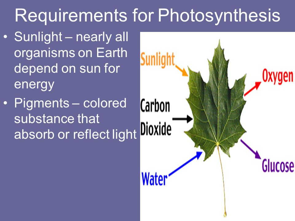 light reqirements pertaining to photosythesis