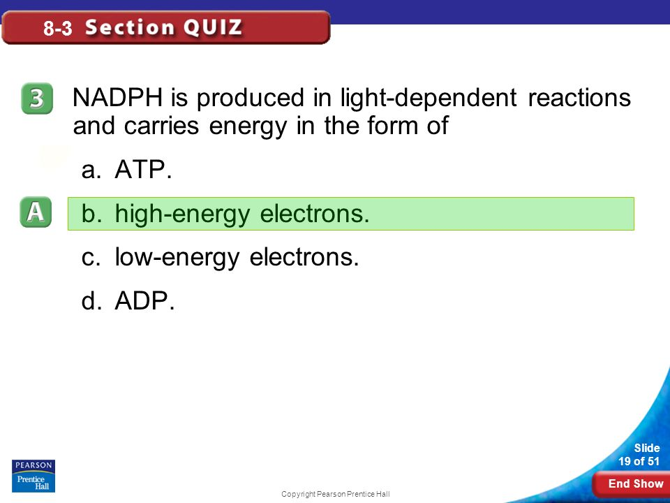 8-3 The Reactions of Photosynthesis - ppt download