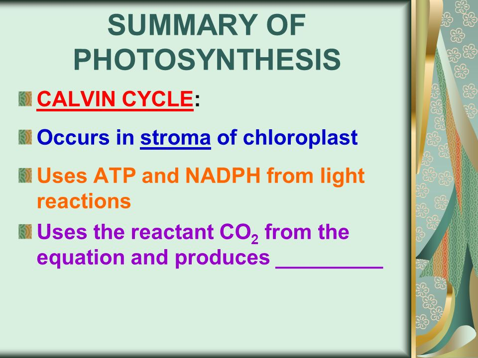 summary of photosynthesis Short essay on photosynthesis  for cells of green plants themselves and for the cells of other organisms are produced in photosynthesis in summary,.