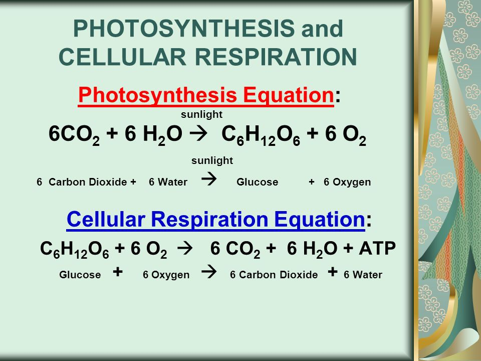 PHOTOSYNTHESIS USES LIGHT ENERGY TO MAKE FOOD - ppt video ...