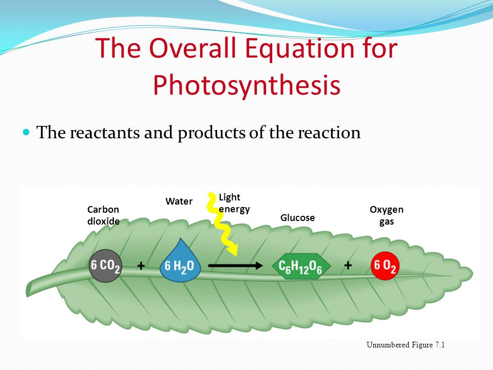 what is the overall goal of photosynthesis A brief outline of various ways to measure the rate of photosynthesis - including measuring photosynthesis via the uptake of carbon dioxide (eg using immobilised algae), via the production of oxygen in pondweed, via the increase in dry mass, and via the production of carbohydrates.