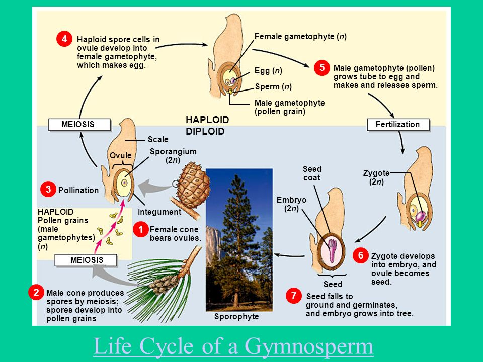 Plants & Photosynthesis A Dr. Production - ppt video ...