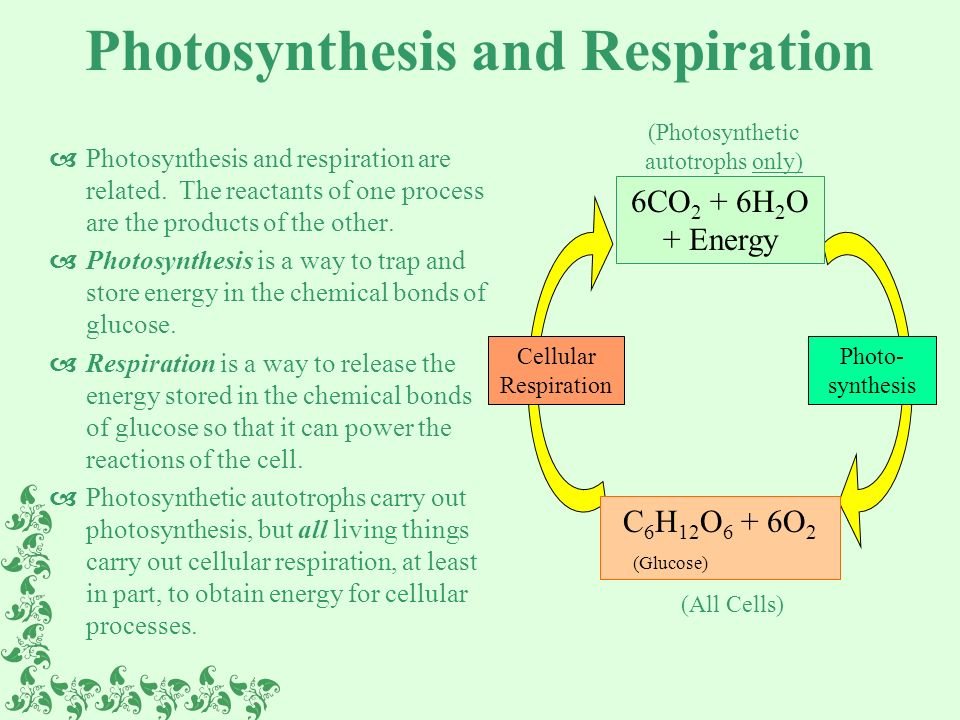 and photosythesis Photosynthesis is the process used by plants, algae and certain bacteria to harness energy from sunlight and turn it into chemical energy.