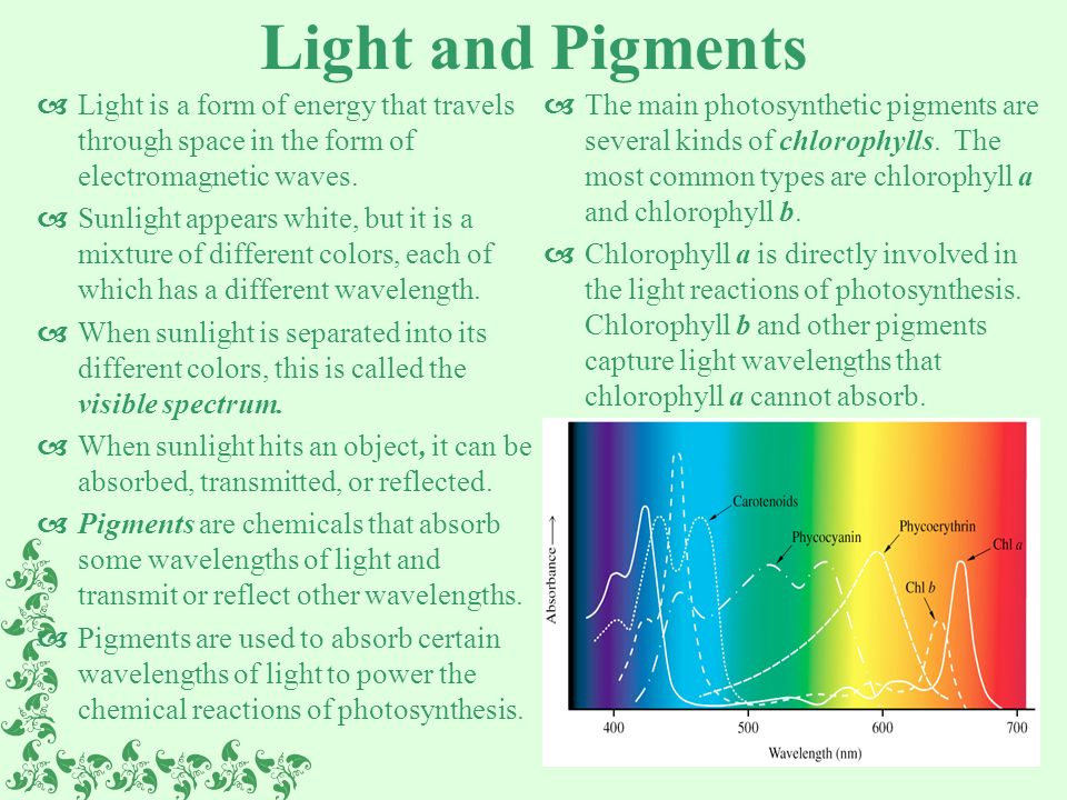 Photosynthesis: Capturing the Energy in Sunlight - ppt video ...