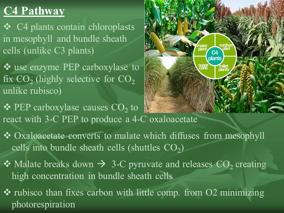 Ch. 7 Capturing Solar Energy: PHOTOSYNTHESIS - ppt download