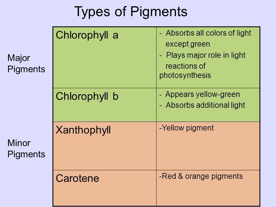 Xanthophyll Pigment