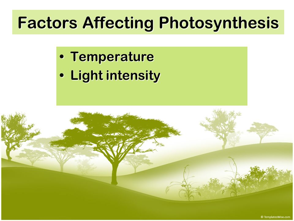 explain the light and dark reactions of photosynthesis pdf