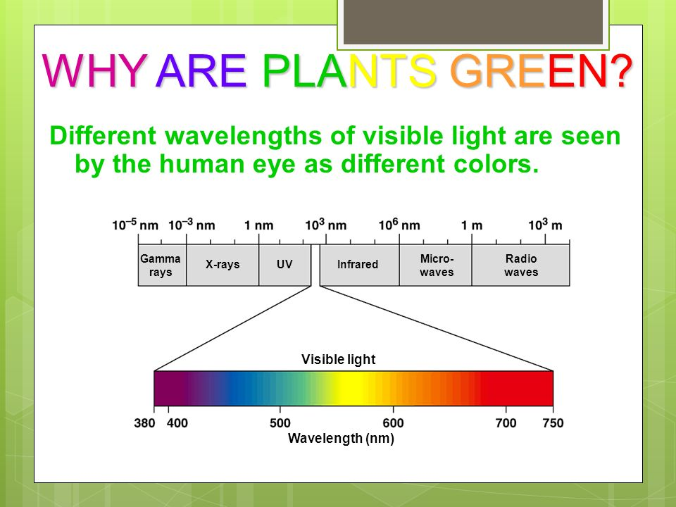 why are plants green