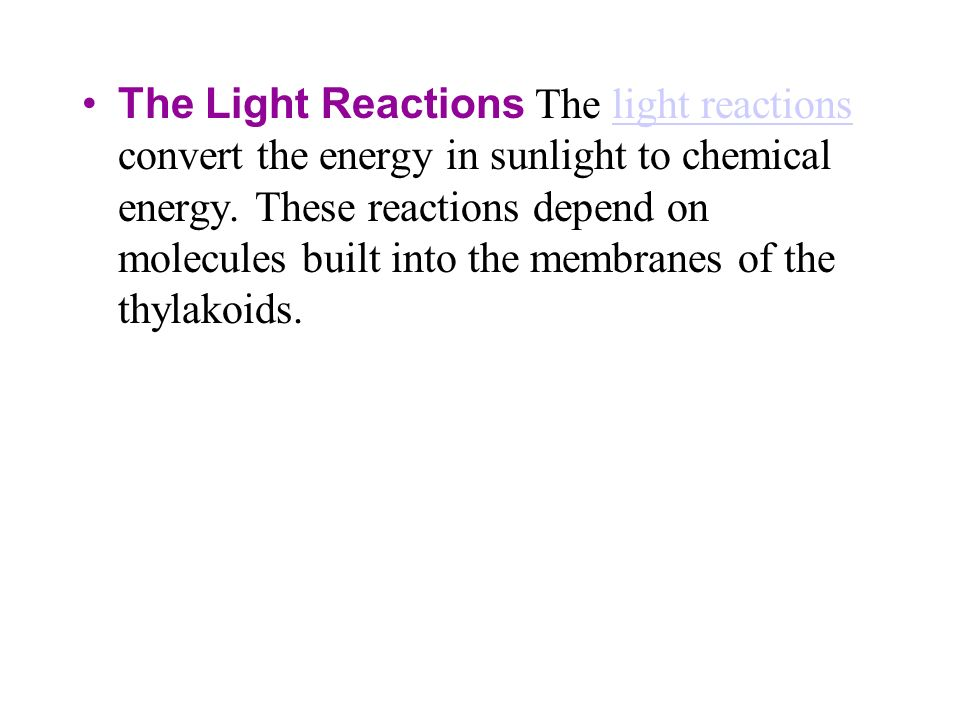 The Light Reactions The light reactions convert the energy in sunlight to chemical energy.
