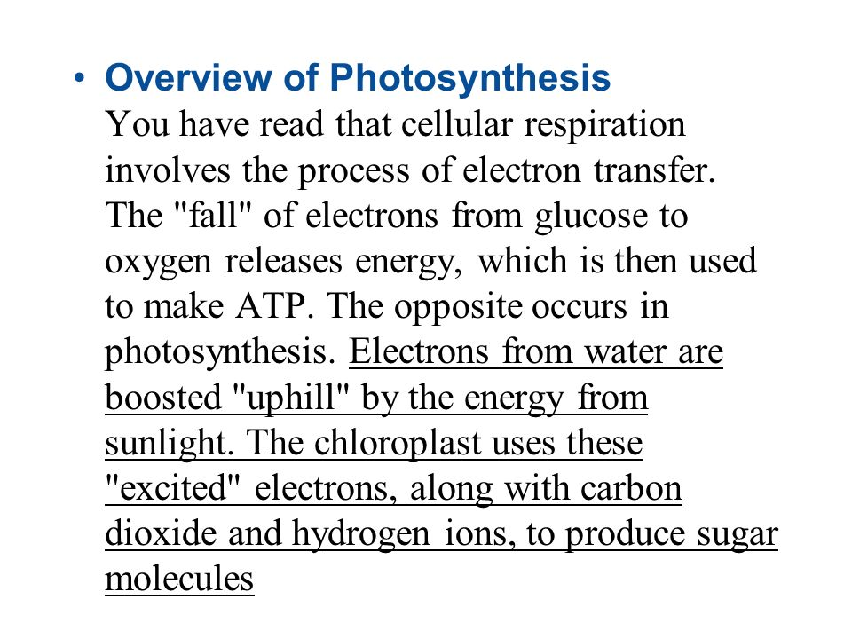 Overview of Photosynthesis You have read that cellular respiration involves the process of electron transfer.