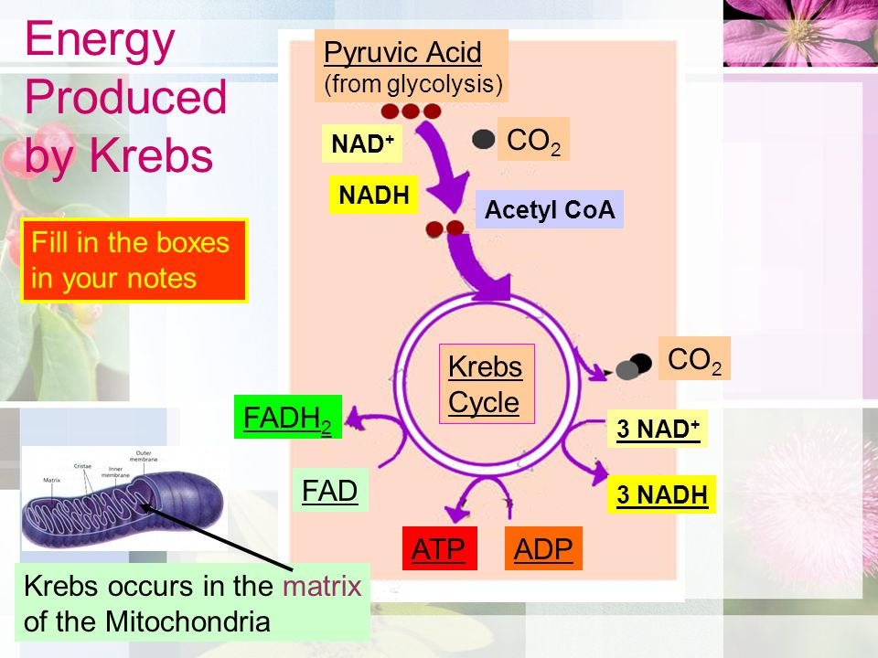 Where Does Energy Come From? - ppt video online download