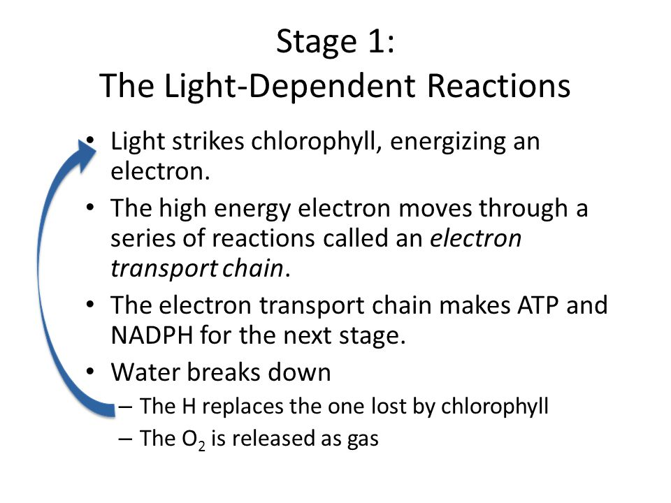 light dependent stage Essentially, oxygen is a waste product of the light reactions of photosynthesis   the first stage of photosynthesis – light-dependent reactions or.