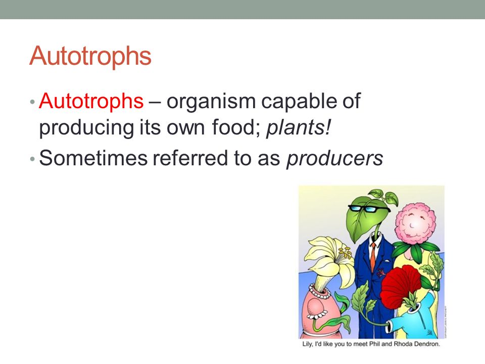 Organisms That Cannot Make Their Own Food Are Called