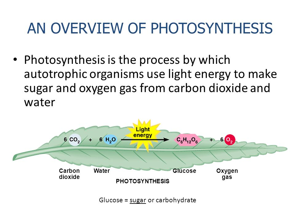 overview of photosynthesis An overview of photosynthesis photosynthesis is a vital process where chloroplast of green plants synthesize sugars by using water and carbon dioxide in the.