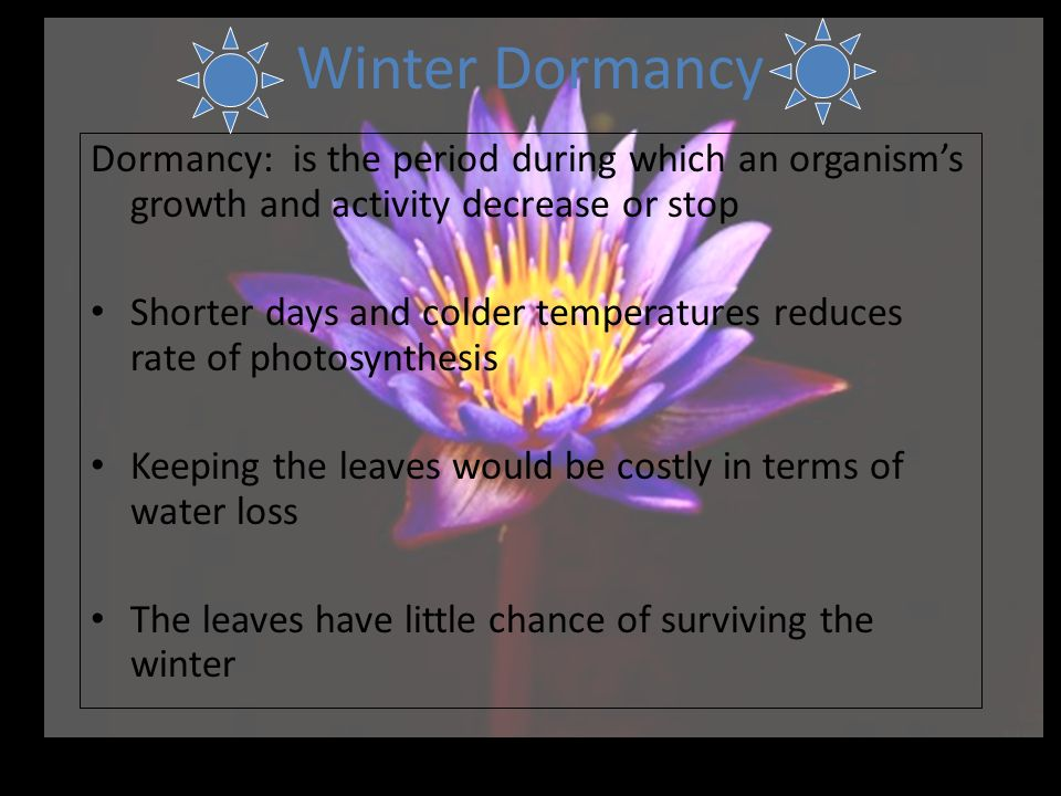 Winter Dormancy Dormancy: is the period during which an organism's growth and activity decrease or stop.