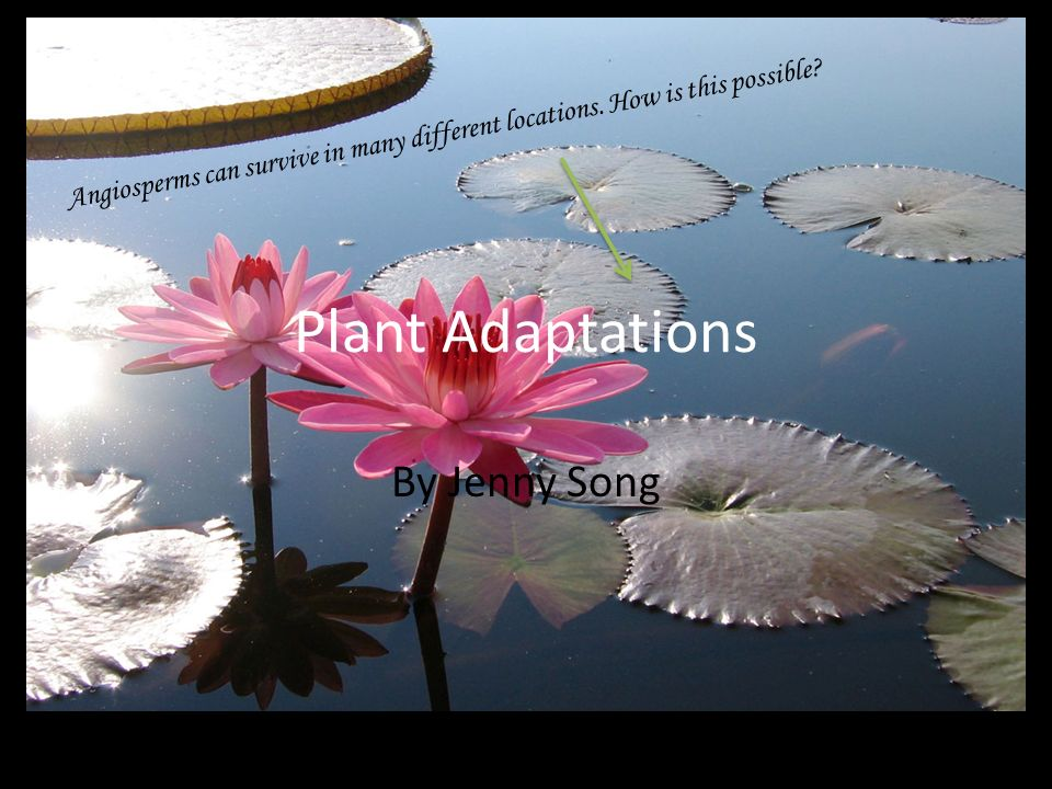 Plant Adaptations By Jenny Song