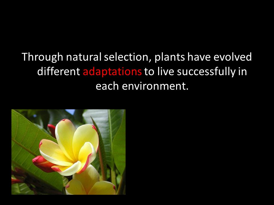 Through natural selection, plants have evolved different adaptations to live successfully in each environment.