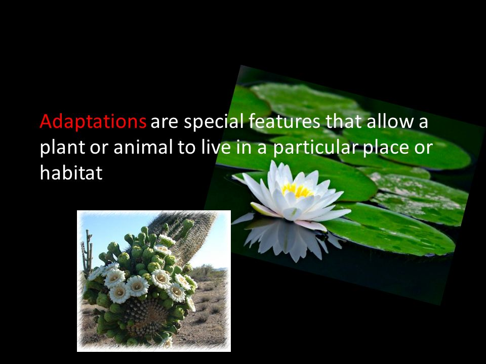 Adaptations are special features that allow a plant or animal to live in a particular place or habitat