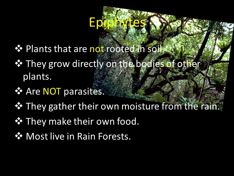 Epiphytes Plants that are not rooted in soil.