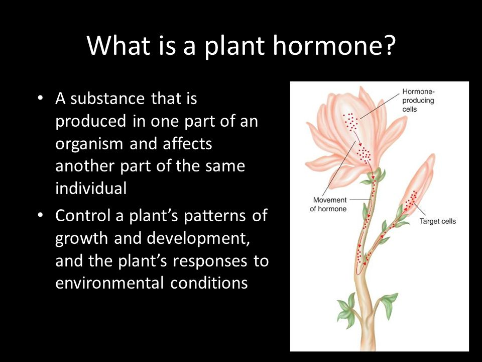 What is a plant hormone A substance that is produced in one part of an organism and affects another part of the same individual.