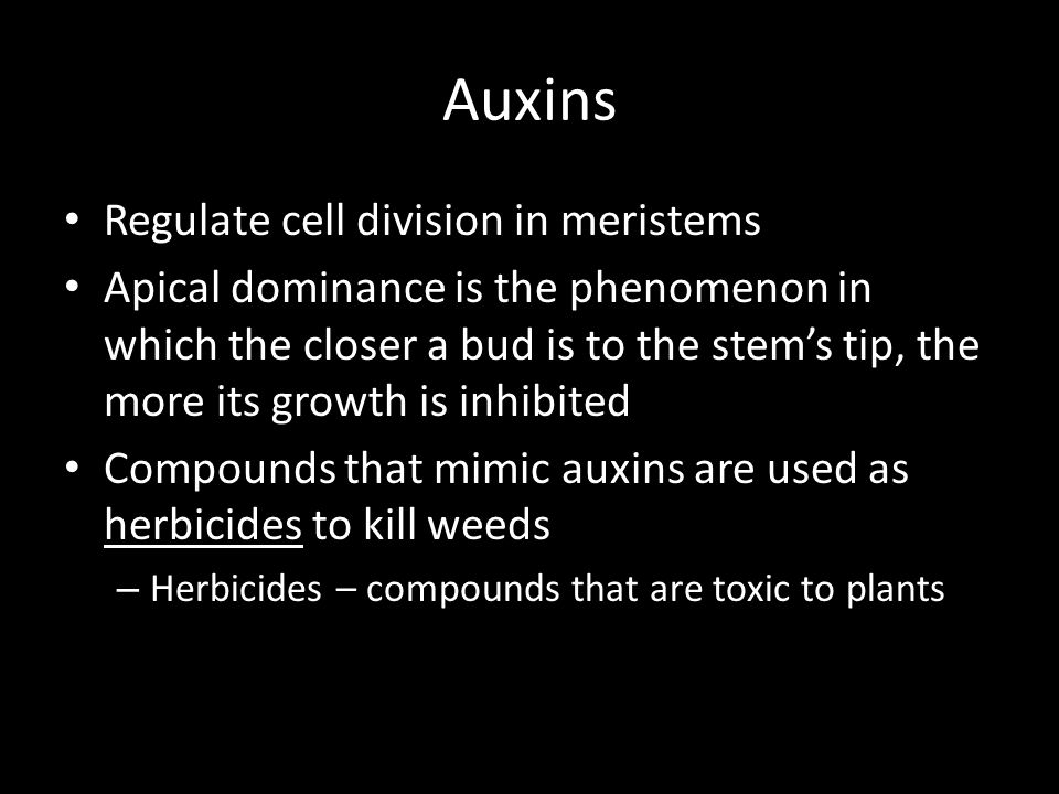 Auxins Regulate cell division in meristems