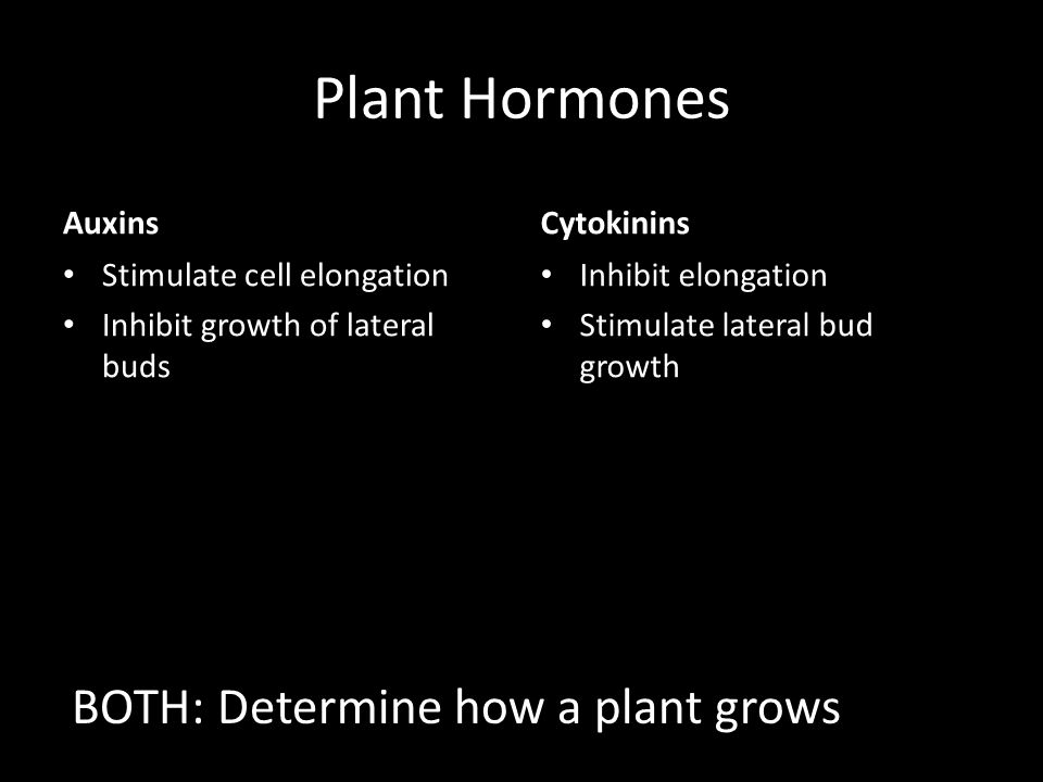 Plant Hormones BOTH: Determine how a plant grows Auxins Cytokinins