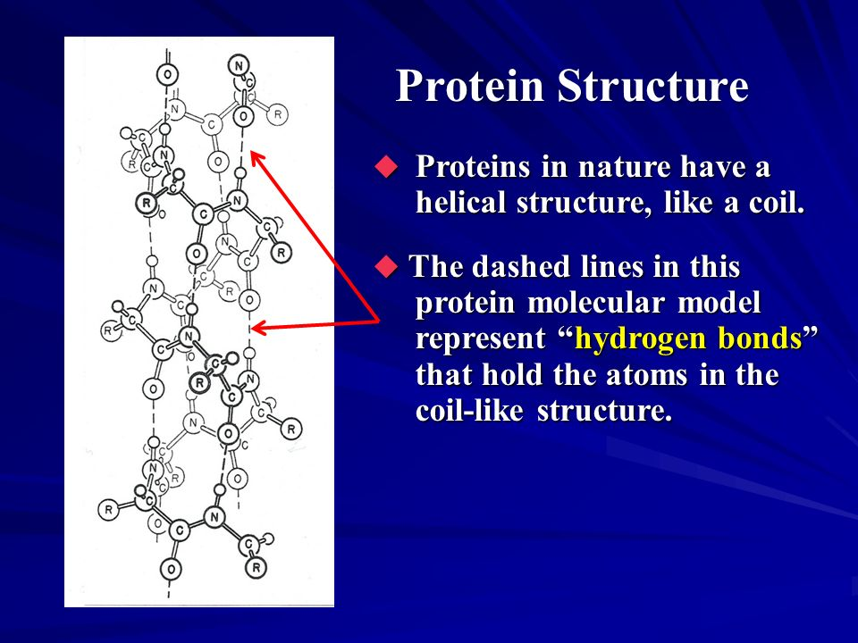 Protein Structure Proteins in nature have a helical structure, like a coil.