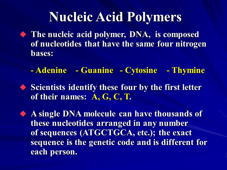 Nucleic Acid Polymers The nucleic acid polymer, DNA, is composed of nucleotides that have the same four nitrogen bases: