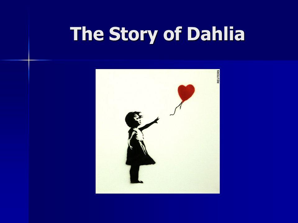 The Story of Dahlia